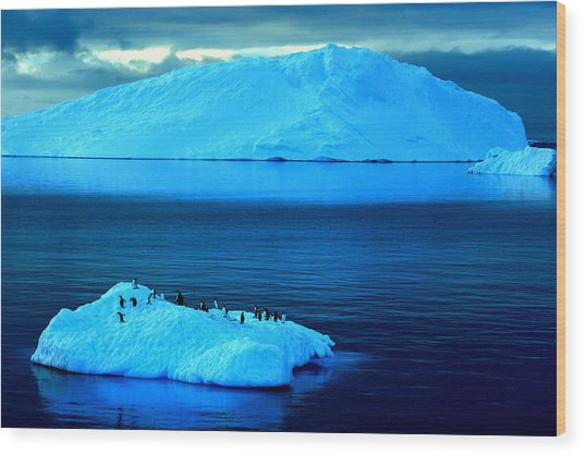Penguins On Iceberg Wood Print