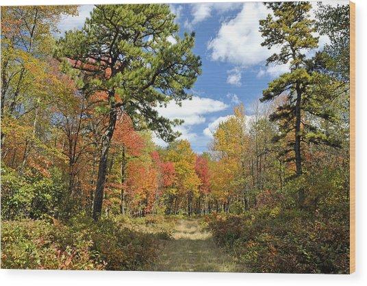 Pennsylvania Forest In Autumn Pocono Mountains Wood Print