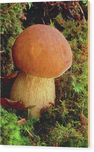Penny Bun Fungus (boletus Edulis) Wood Print