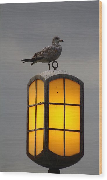 Pensive Gull Wood Print