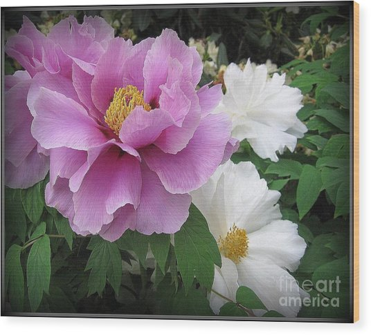 Peonies In White And Lavender Wood Print