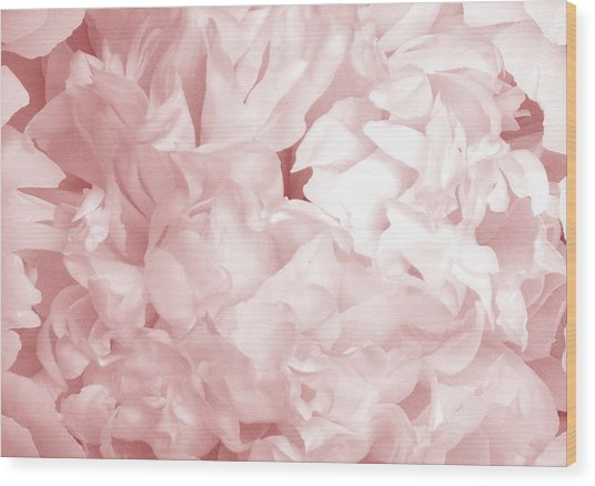 Peony Pink Beauty Wood Print
