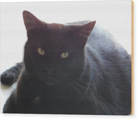 Pepsi The Lucky Black Cat Wood Print