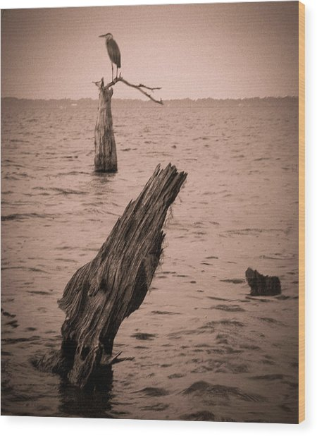 Perch Wood Print