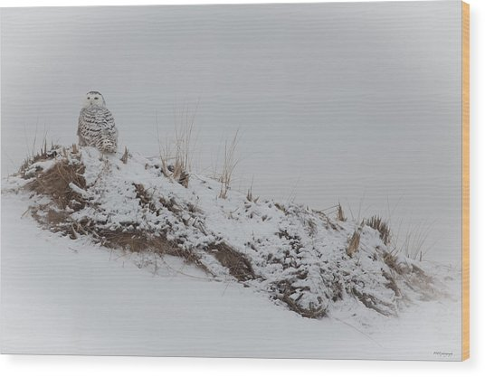 Perched Snow Owl Wood Print
