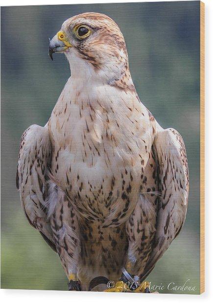 Peregrine Falcon Wood Print by Marie  Cardona