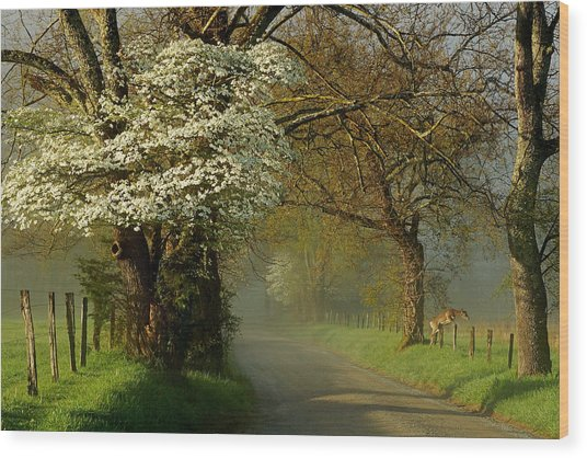 A Perfect Morning Wood Print by Deb Campbell
