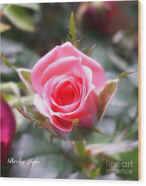 Perfect Rosebud In True Color Wood Print