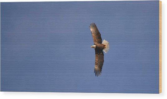 Perfected Flight Wood Print