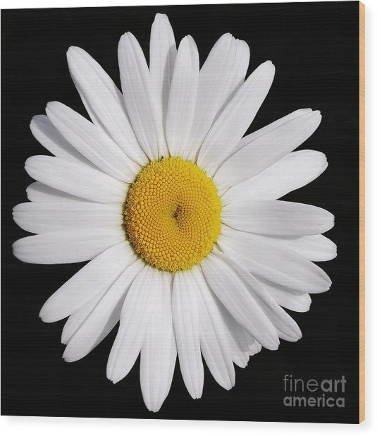 Perfectly Daisy Wood Print