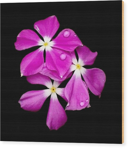 'periwinkle Flowers After Rainfall' Wood Print