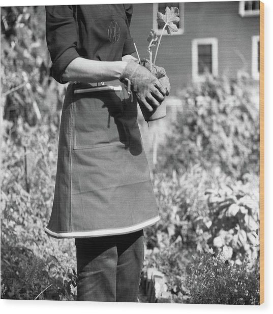 Person Wearing A Gardening Apron Wood Print by Frances McLaughlin-Gill