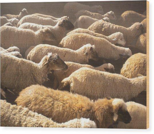 Peruvian Wool Parade Wood Print