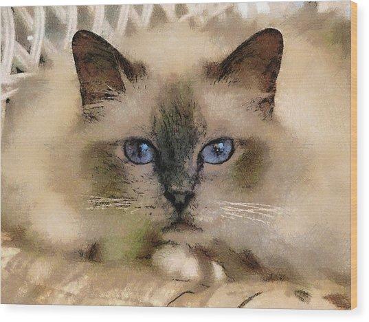 Pet Cat Wood Print