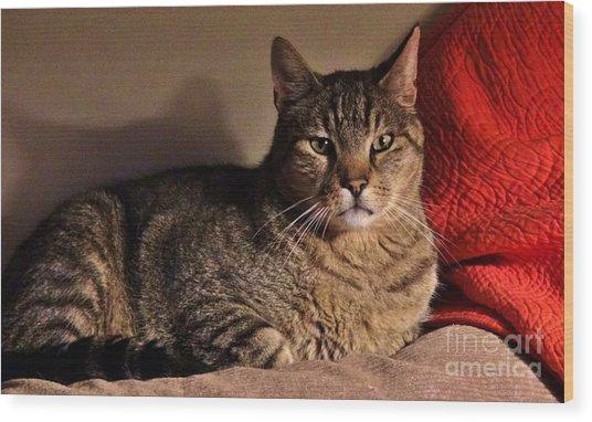 Pet Portrait - Max The Cat Wood Print