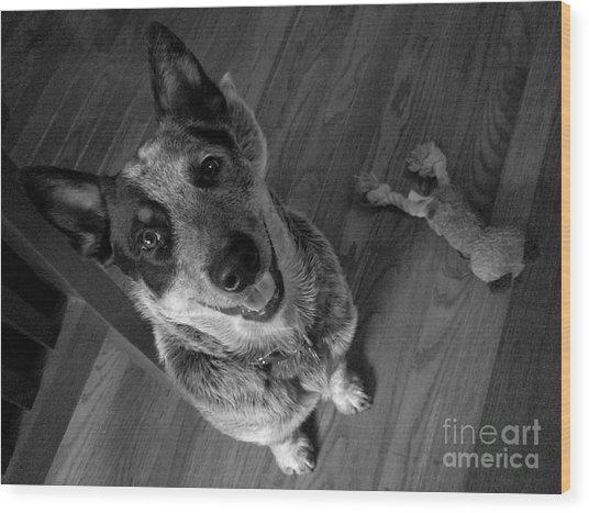 Pet Portrait - Forrest Wood Print