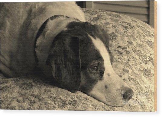 Pet Portrait-waiting For Mom Wood Print