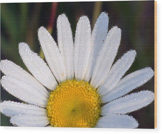 Petals And Dew Wood Print