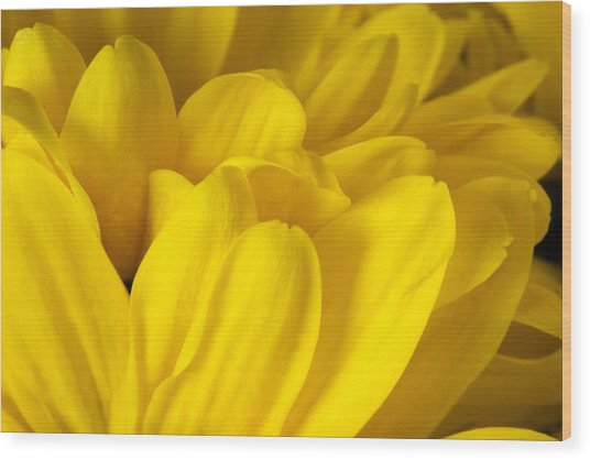 Petals Of A Yellow Daisy Wood Print by S Cass Alston