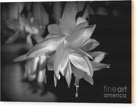 Petals Of Silver Wood Print
