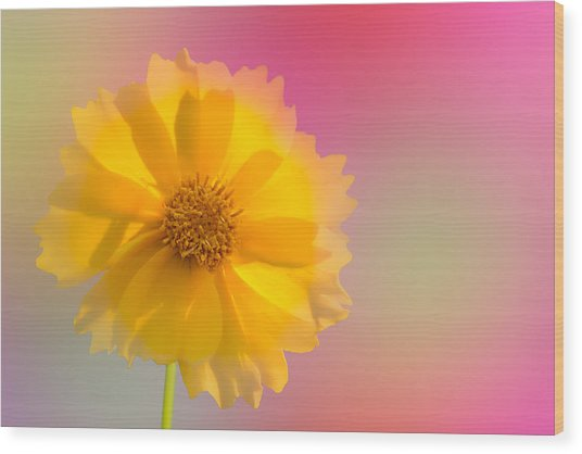 Petals Of Sunshine Wood Print