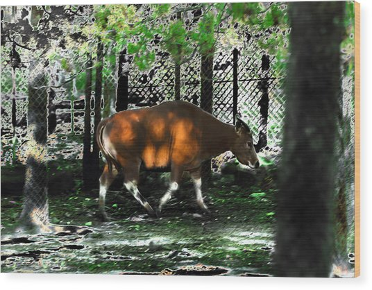 Phenomena Of Banteng Walk Wood Print