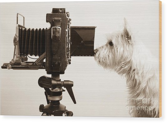 Pho Dog Grapher Wood Print