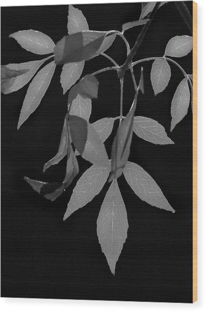 Phoenix Fall 05 Wood Print