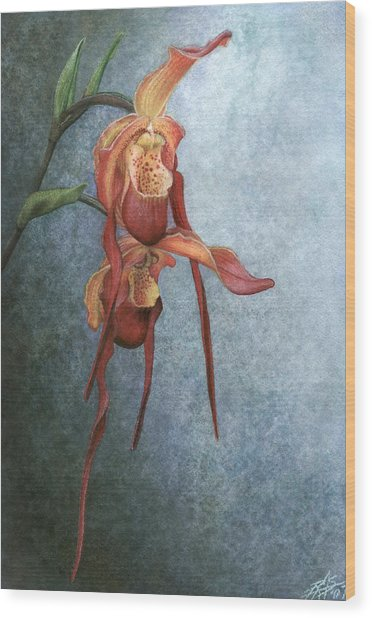 Phragmipedium Bouley Bay Wood Print