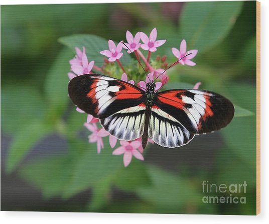 Piano Key Butterfly On Pink Penta Wood Print