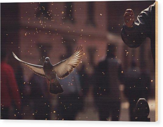 Pigeons In Patan Square, Kathmandu-nepal Wood Print