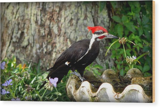 Pileated Woodpecker Wood Print by Lynn Griffin