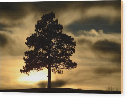 Pine At Sundown Wood Print