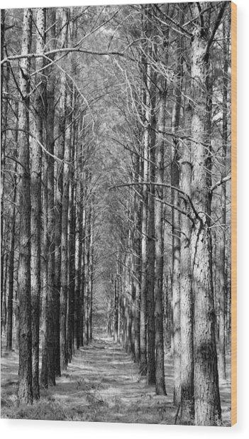 Pine Plantation Wood Print