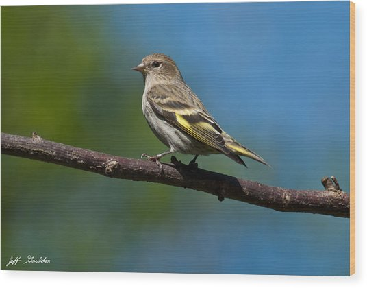 Pine Siskin Perched On A Branch Wood Print