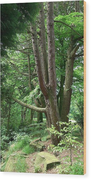 Pine Soldiers Wood Print by Phil Nolan