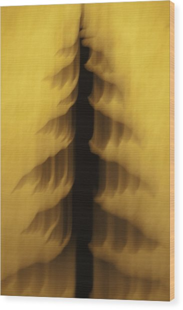 Wood Print featuring the photograph Pine Tree Abstract 2 by Sherri Meyer