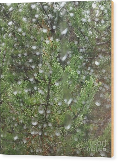 Pine Tree In The Rain Wood Print