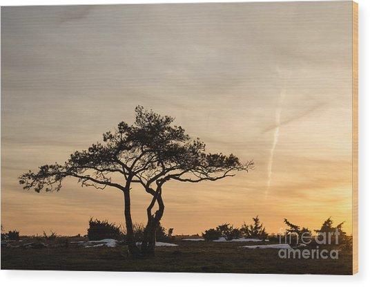 Pine Tree Portrait Wood Print