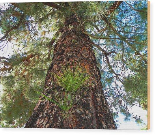 Pine Tree Tower Wood Print