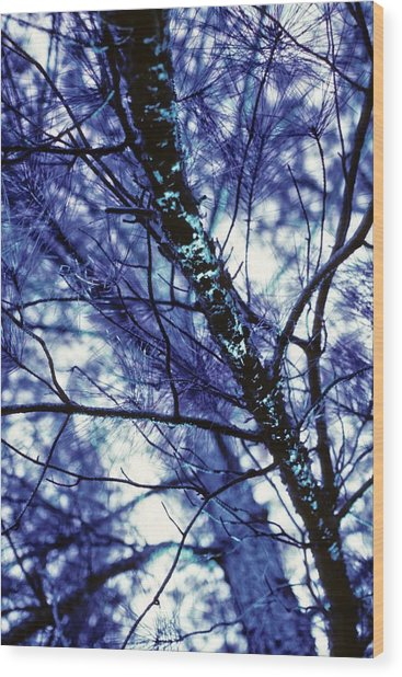 Pine Trees Redux In Blue Wood Print