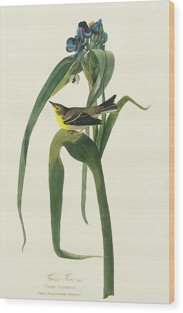 Pine Warbler Wood Print by Natural History Museum, London/science Photo Library