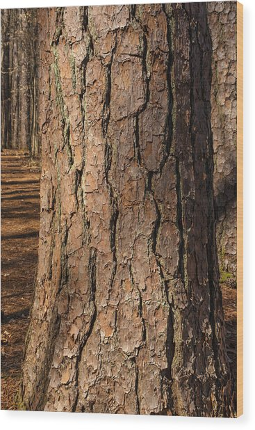 Pinebark Wood Print
