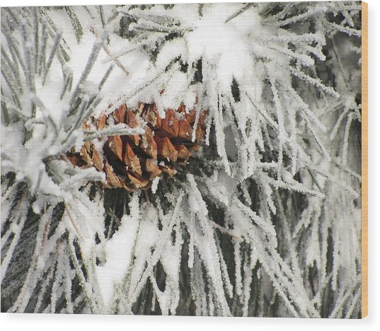 Pinecone In Snow Wood Print by Steven Parker