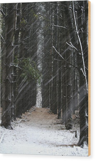 Pines In Snow Wood Print