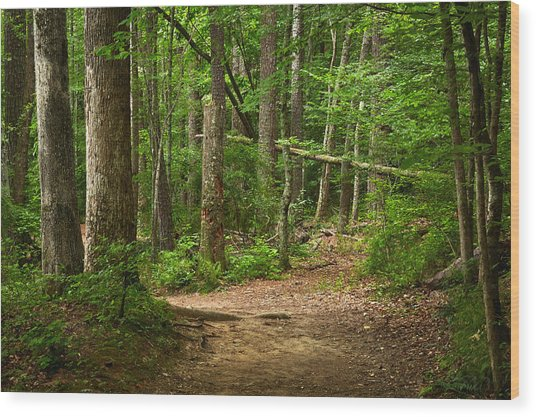 Pinewood Path Wood Print