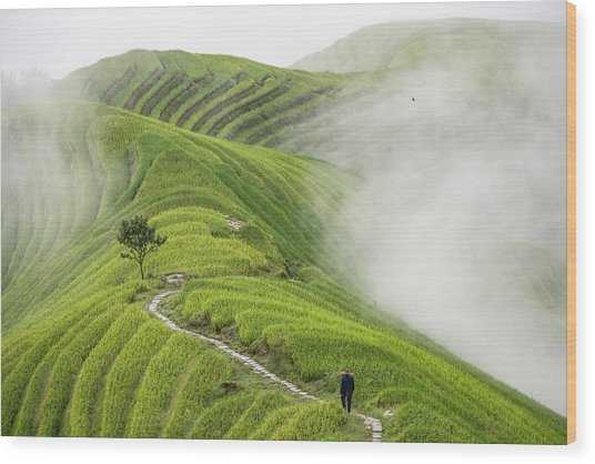 Ping'an Rice Terraces Wood Print