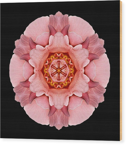 Pink And Orange Rose Iv Flower Mandala Wood Print