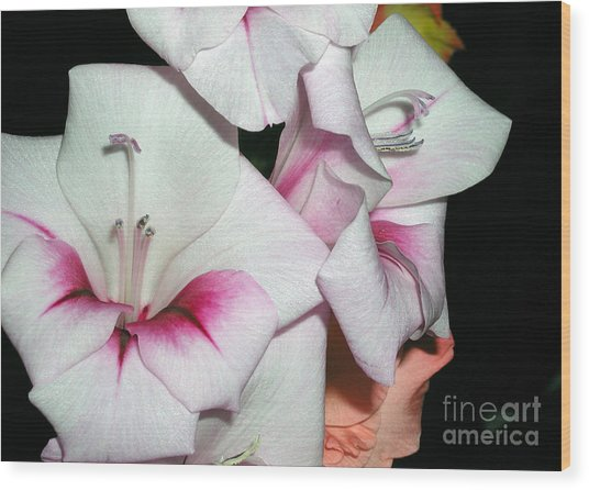 Pink And White Beauties Wood Print