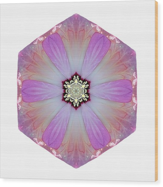 Pink And White Hibiscus Moscheutos I Flower Mandala White Wood Print